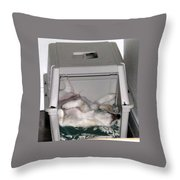 Sleeping In The Dog House Throw Pillow