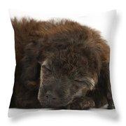 Sleeping Puppy Throw Pillow