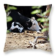 Sleepy Arizona Cows Throw Pillow