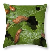 Slugs And A Snail Are Feeding On Leaves Throw Pillow