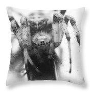 Small Alberta Spider Throw Pillow