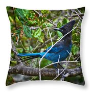 Small Blue Jay Of California Throw Pillow