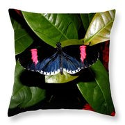 Small Postman Butterfly Throw Pillow