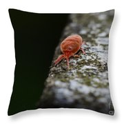 Small Red Insect Throw Pillow