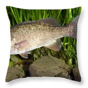 Smallmouth Bass Micropterus Dolomieu Throw Pillow