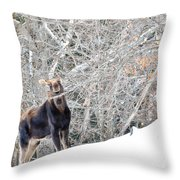 Smiling Moose Throw Pillow
