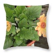Smiling Orange Zerbera Flower Throw Pillow