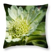 Snail And Wildflower Throw Pillow