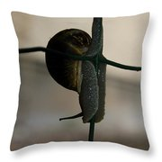 Snail On The Fence Throw Pillow