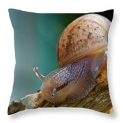 Snail Traversing Throw Pillow