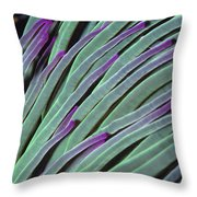Snakelocks Anemone Anemonia Viridis Throw Pillow