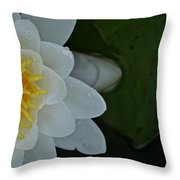Sneaking In Throw Pillow