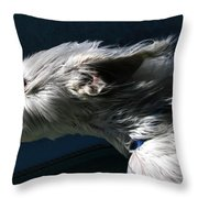 Sniffing Down The Highway Throw Pillow