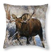 Snow Bull Throw Pillow