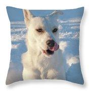 Snow Dog 0249 Throw Pillow
