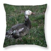 Snow Goose Blue Morph Throw Pillow