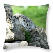 Snow Leopard At Rest. Kitty Time Throw Pillow