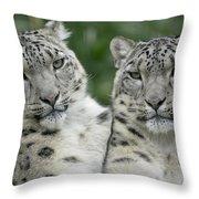 Snow Leopard Pair Sitting Throw Pillow