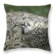 Snow Leopards Playing Throw Pillow