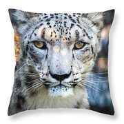 Snow Leopards Stare Throw Pillow