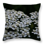 Snow Sport Yarrow Throw Pillow