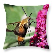 Snowberry Clearwing Moth Throw Pillow