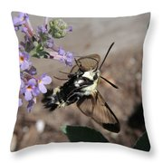 Snowberry Clearwing Moth Feeding Throw Pillow