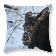 Snowy Nose Throw Pillow