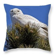 Snowy Owl High Perch Throw Pillow