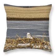 Snowy Owl Perched Frozenpond Throw Pillow