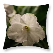 Snowy White Violet Throw Pillow