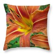 Soaking Up The Sun - Orange Daylily Throw Pillow