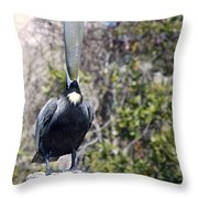 Soapbox - Pelican Throw Pillow