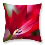 Soaring Red Throw Pillow