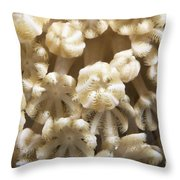 Soft Coral Polyps Feeding, Papua New Throw Pillow