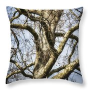 Soft Winter Light Throw Pillow
