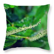 Water Droplets On Green Leaves Throw Pillow