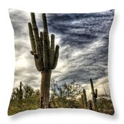 Sonoran Desert Iv Throw Pillow