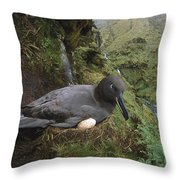 Sooty Albatross Phoebetria Fusca Throw Pillow
