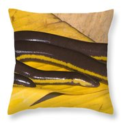 Southeast Asian Caecilian Throw Pillow
