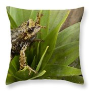 Southern Frog Newly Discovered Species Ecuador Throw Pillow