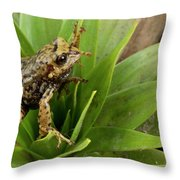 Southern Frog Pristimantis Sp, Newly Throw Pillow