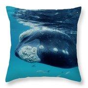 Southern Right Whale Australia Throw Pillow