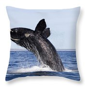 Southern Right Whale Throw Pillow