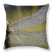 Southern Skimmer Orthetrum Brunneum Throw Pillow
