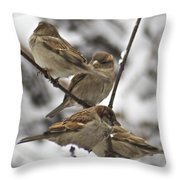 Sparows 3629 Throw Pillow