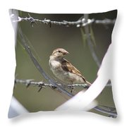 Sparrow - Protected By Razor Wire Throw Pillow