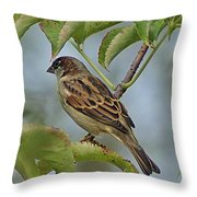 Sparrow I Throw Pillow