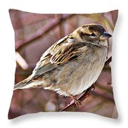Sparrow II Throw Pillow