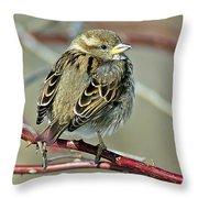 Sparrow IIi Throw Pillow